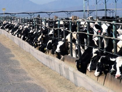 California Scientists Develop New Tool to Understand Dairy Air Quality